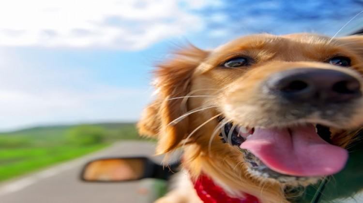 Sardegna Villaggi dog friendly